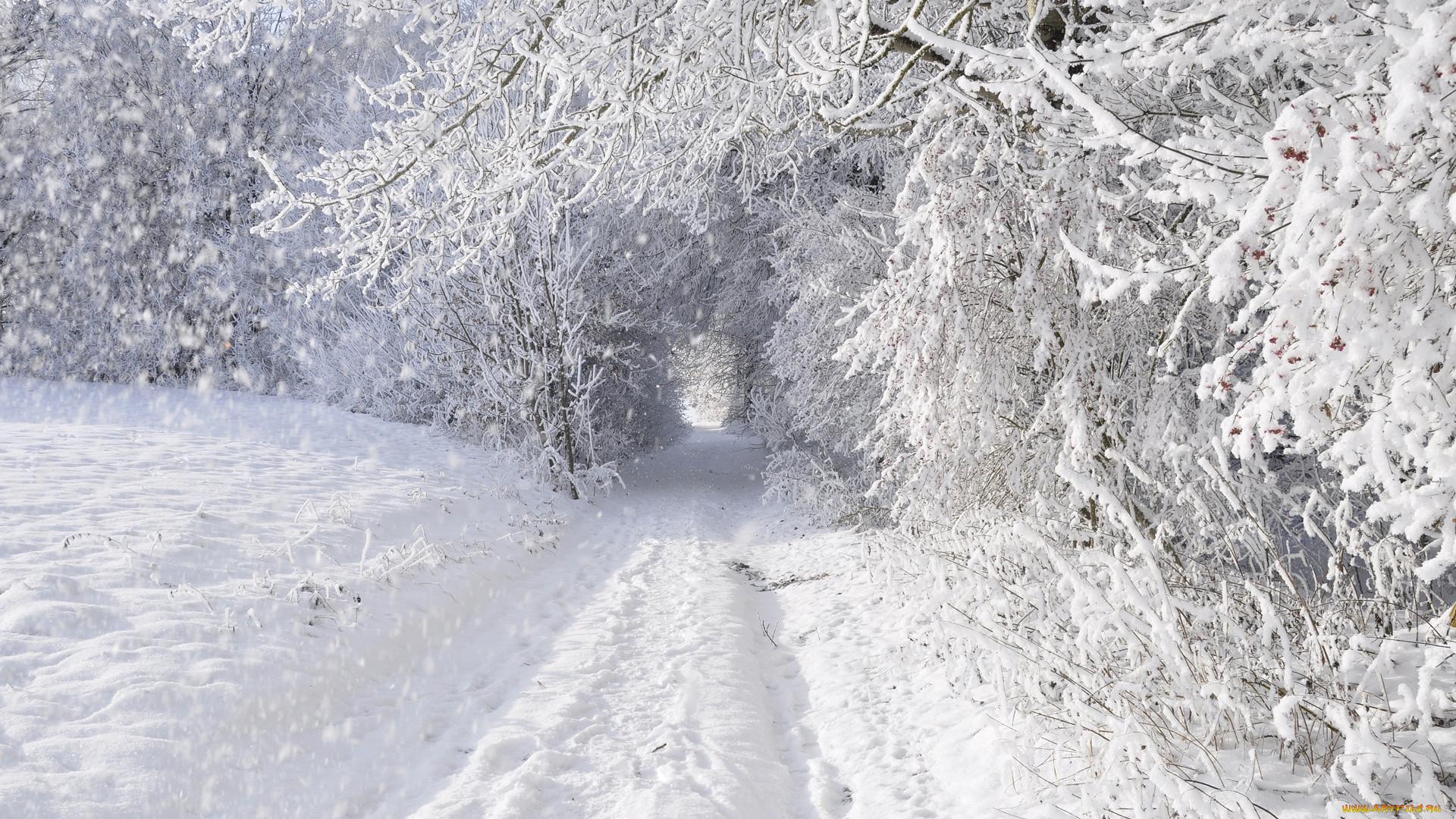 Зима дорога снег заснежено деревья